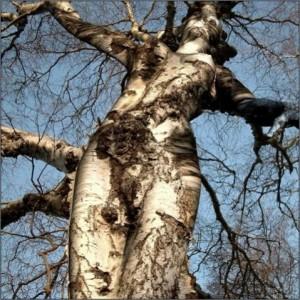 femme-arbre